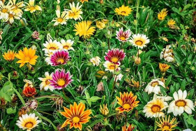 市の花壇に色とりどりの花。小さな花のパターン