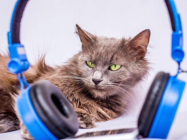 ヘッドフォンの近くのふわふわ猫。スマートフォンとヘッドフォンを使用してお気に入りの音楽を聴く