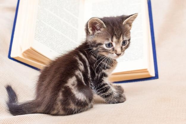 開いた本の横にある小さな縞模様の猫。冒険文学を読む