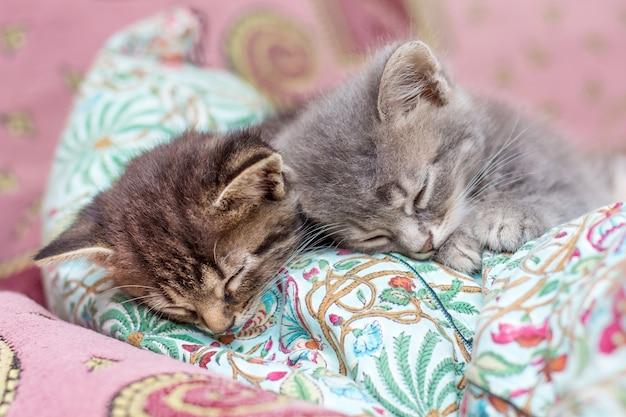 Два маленьких котенка спят на подушке в спальне