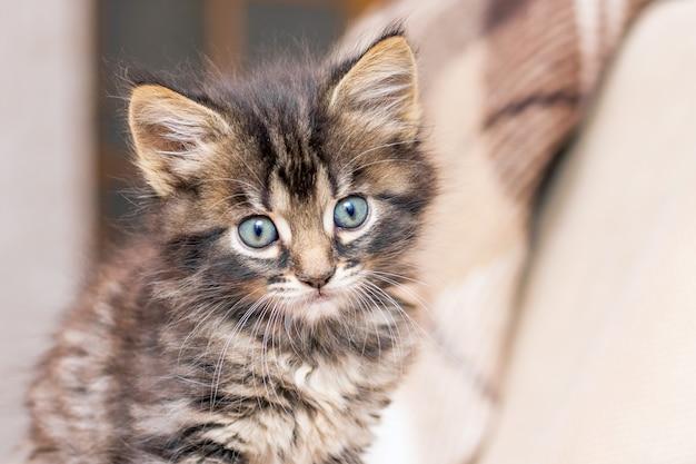 ぼやけて背景の部屋で小さな子猫の肖像