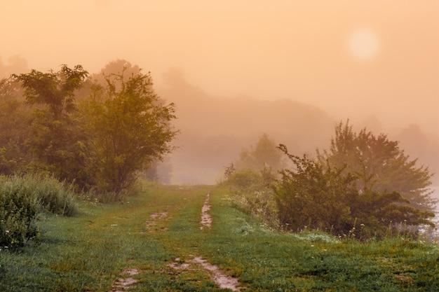 夏の霧のかかった朝。道は公園にあります。濃霧の背後にある森の日の出