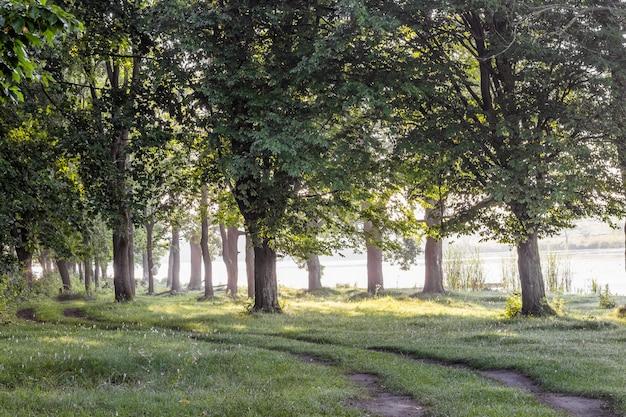 森の中の波状の道。川の近くの森の木。森の朝