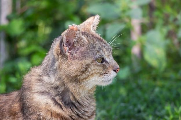 緑のクローズアップの肖像画を背景に庭の古い猫
