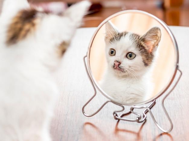 白い斑点のある子猫が鏡を見る
