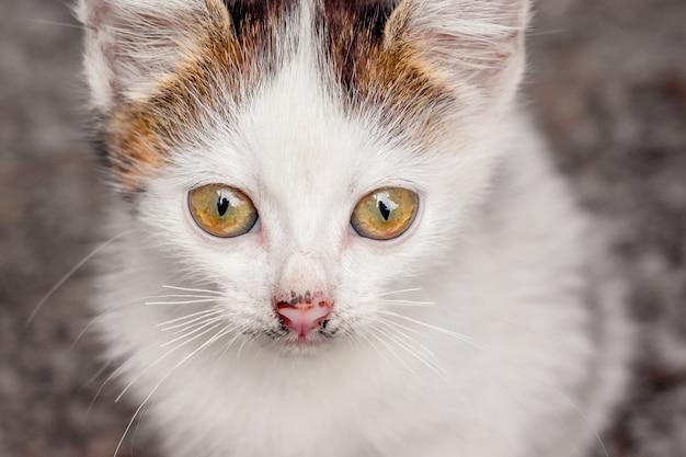 はっきりとした外観の白い斑点のあるキティ。クローズアップの肖像画
