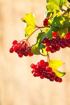 ゲオルダーの果実が晴れた秋の日に上昇しました