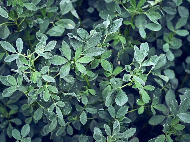 自然の背景に水滴と緑の葉。