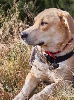 Собака в траве в горах.