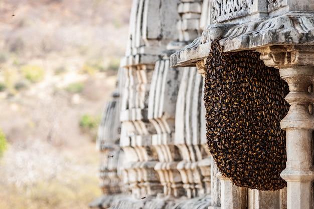 Гнездо пчелы крупным планом на стене.