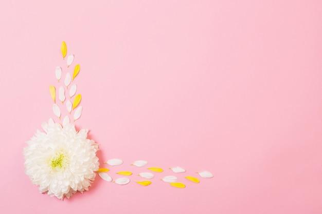 ピンクの紙の背景に白と黄色の菊