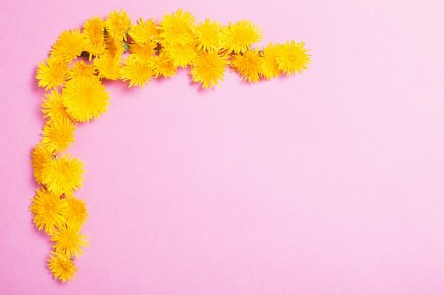 ピンクの紙の背景に黄色のタンポポ