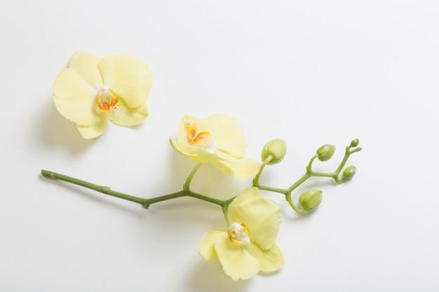 黄色の蘭の花