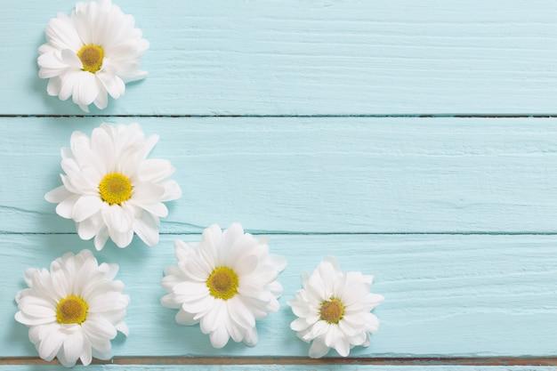 青い木製の背景に白い菊