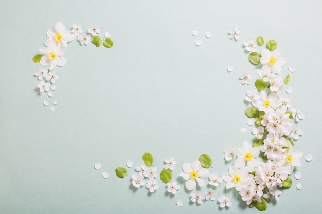 Белый нарцисс и вишневые цветы на зеленой бумаге