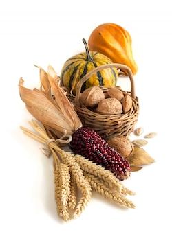 Урожай с кукурузой, зерновые колосья, тыквы и орехи, изолированные на белом с копией пространства