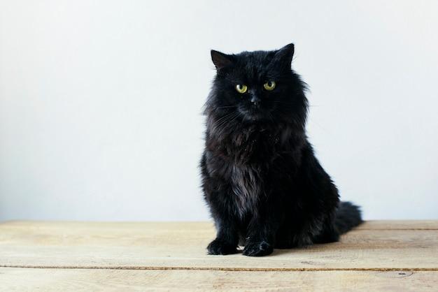 Серьезный черный кот сидит в гостиной