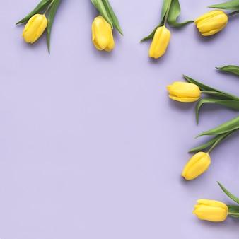 Весенние цветы. рама изготовлена из желтого тюльпана цветы на фиолетовом фоне. плоская планировка, вид сверху. минимальный цветочный макет концепции. добавьте свой текст.