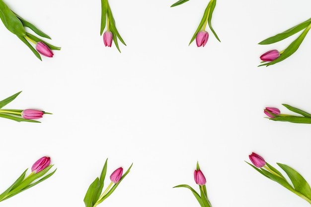花の組成物。白い背景の上のチューリップの花。春のコンセプト。フラット横たわっていた、トップビュー、コピースペース