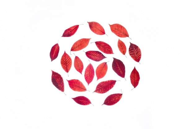 Прозрачные красные листья изолированы