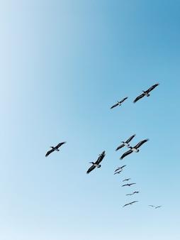 昼間に青空の下を飛んでいる鳥の群れ