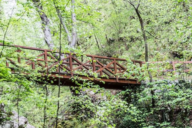 深い森の中の古い木造の橋