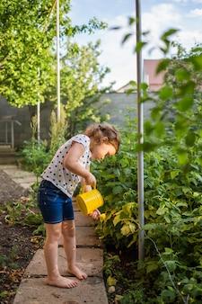 Маленький помощник в саду поливает кусты малины с желтой лейкой на закате