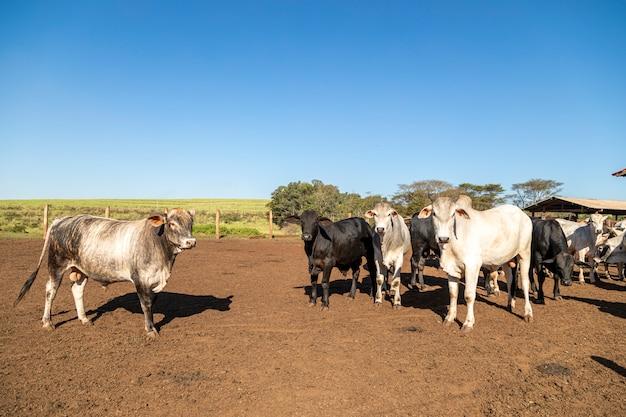 自然の中で牛舎の牛のグループ