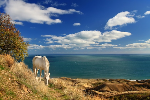 海のそばの白い馬