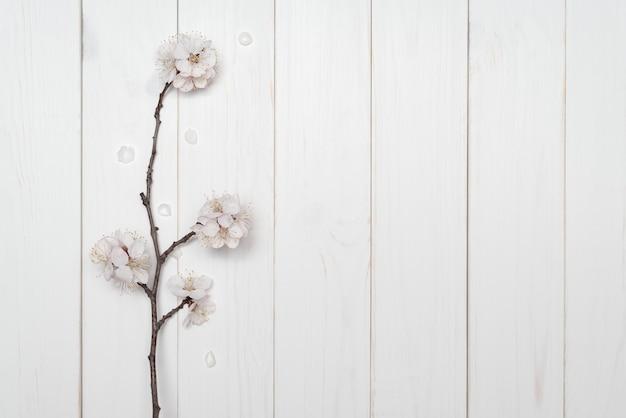 Ветка цветущего дерева на белом фоне деревянные