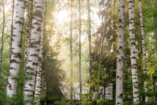 Красивый осенний лес в дымке. солнечный лучик