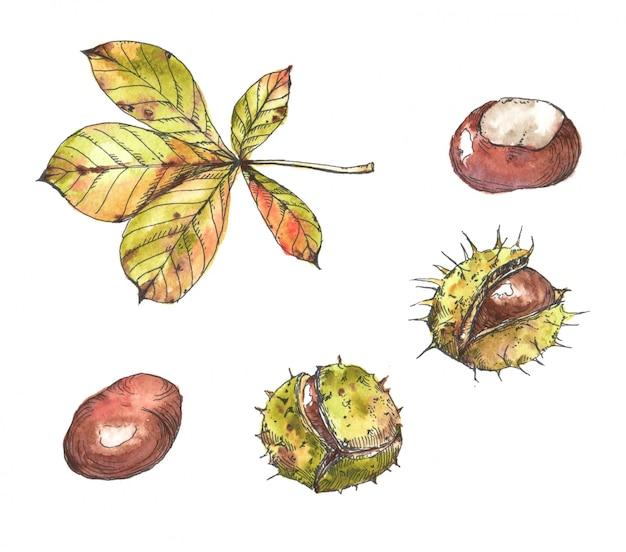 Нарисованная вручную иллюстрация осени акварели и чернил. рисование изолированных разных каштанов и листьев