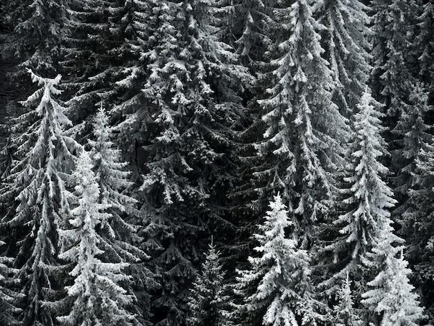 フォレストマウンテンの凍結の木