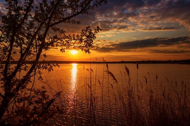 フォアグラウンドで木の枝と川に沈む夕日