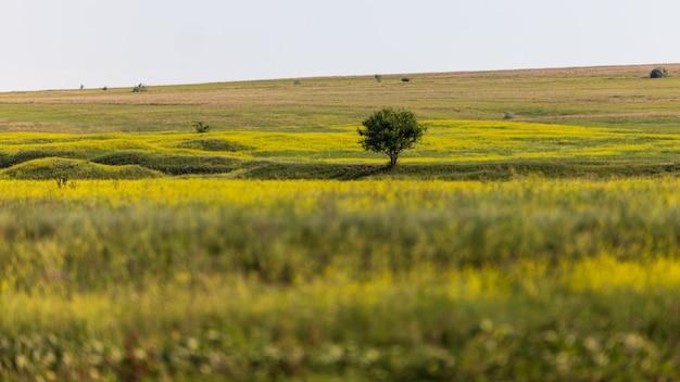 Одинокое стоящее дерево, на склоне холма, среди полевых трав с малой глубиной резкости