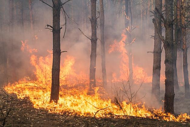 Развитие лесного пожара