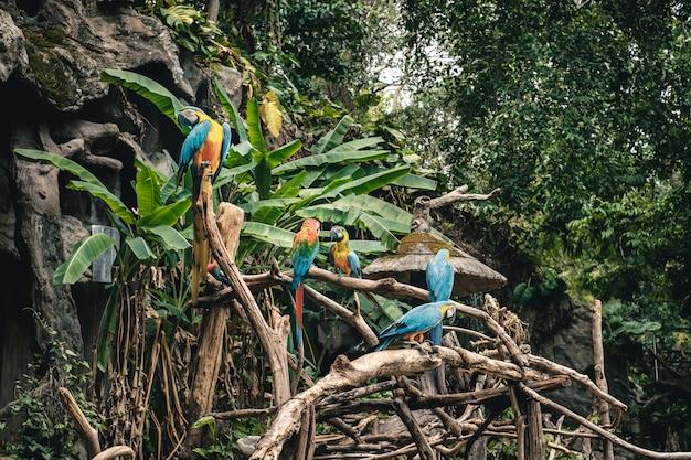 熱帯林のコンゴウインコオウムのグループ