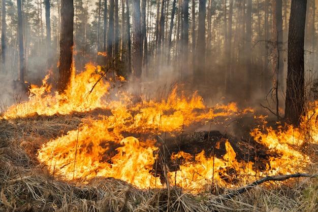 森林火災が進行中です