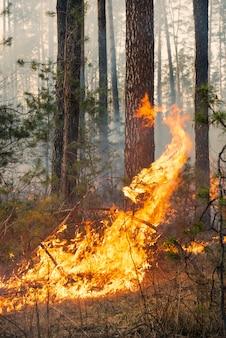 森林火災の大きな炎