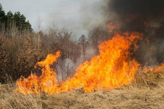 森の近くの農地に火