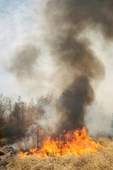 森の近くの農地に大火事