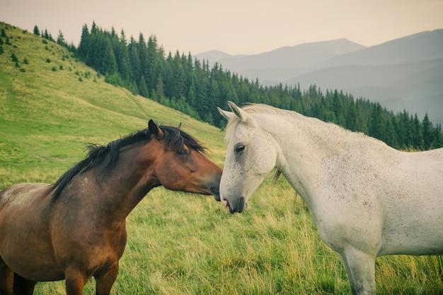 カルパティア山の野生の馬