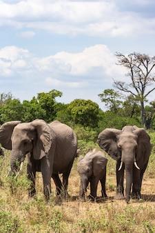 アフリカ、ケニアの象の家族