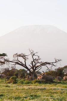 Слоны возле горы килиманджаро в кении, африка