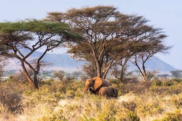 Саванна с дикими слонами. кения, африка