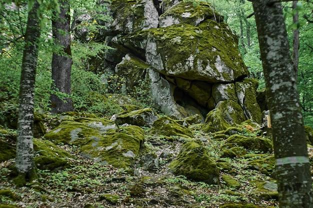 山の森の苔状の下草。背景としての森。自然の夏の森の風景。