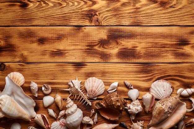 多くの海の貝殻が木製の背景にレイアウト。上のコピースペースを上から見た図。