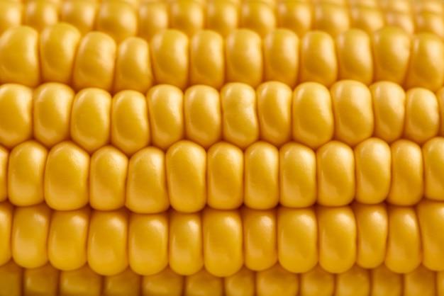 Свежий початок кукурузы, макро вид