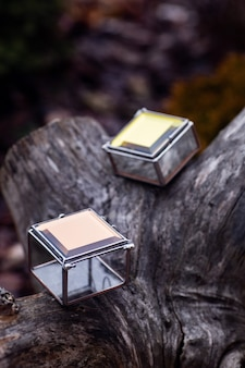 木の切り株の宝石箱