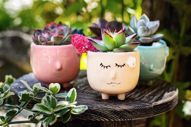 Суккуленты в вазоне в виде симпатичных сонных лиц на маленьком деревянном столе в саду